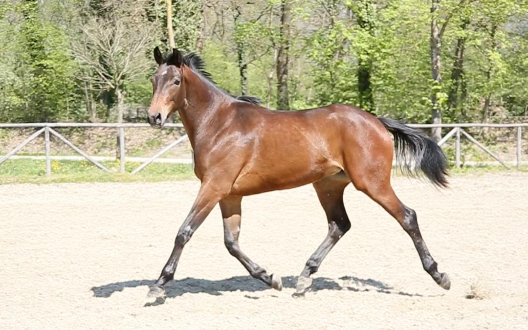 Acquista il tuo cavallo da Fonte Abeti: sarà una esperienza straordinaria e gratificante!
